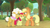 Applejack and Goldie Delicious facing off S9E10