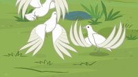 Doves fluttering into the air S9E26