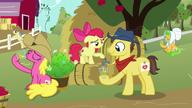 S07E14 Apple Bloom nalewa cydr fanowi