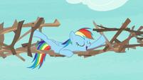 "Rainbow Dash ""not to disagree"" S8E9"