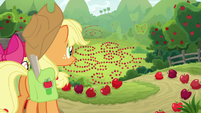 AJ and Apple Bloom find more apple patterns S9E10