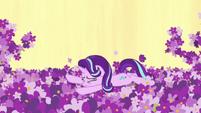 Starlight Glimmer falls in the lavender patch S7E10