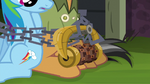 Rainbow and Quibble bound by Griffon's Lock S6E13.png