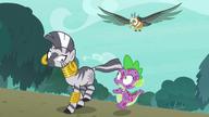 S08E11 Zecora i Spike uciekają przed ptakiem