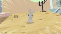 Bunny dead ahead S2E14