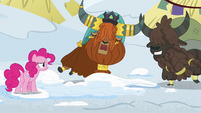 Rutherford horn-bumps one of his yak subjects S7E11