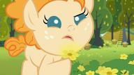 S07E13 Pear Butter sprawdza czy jaskier rozjaśnia jej podbródek