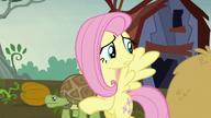 S05E23 Fluttershy martwi się o zwierzęta