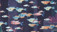 Schools of fish swims across the screen S8E6