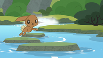 Brown bunny jumps across the stream S8E6