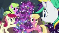 Flower trio presents Rarity's lavender flowers S7E19