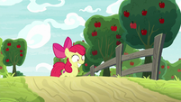 Apple Bloom excitedly climbs the hill S9E10