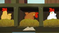 Brown chicken looks at chicken feed inquisitively S6E10