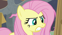 Fluttershy bares her teeth at Angel Bunny S9E18