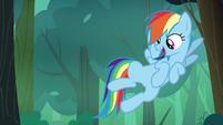 Rainbow Dash spots a berry bush S7E16