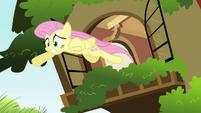 Fluttershy window leap S2E21