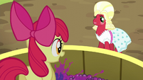 Apple Bloom squishing grapes S5E17