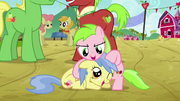 Two fillies playing with each other S3E08.png