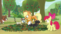 Goldie's cats run across Apple Bloom's pit trap S9E10