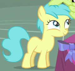 Rainy Feather Earth pony ID S4E13.png