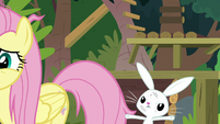 Angel still trying to get Fluttershy's attention S9E18