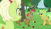 Granny, Goldie Delicious, and Apple family stallion S7E13