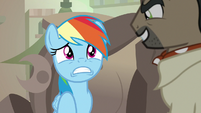 Rainbow Dash in a state of panic S7E18