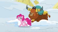 """Pinkie Pie """"these yak snow beds are"""" S7E11"""