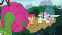Rarity observes CMC and Zipporwhill from bushes S7E6