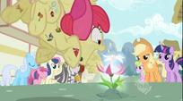Apple Bloom pounces S02E06