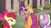 Crusaders observe Sugar Belle and Feather Bangs S7E8