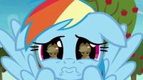 Rainbow pouting desperately at Applejack S8E5