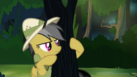 Daring Do peeking around tree S4E04