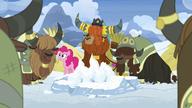 S07E11 Jaki zgadzają się z Pinkie Pie