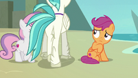 Terramar walking past Sweetie Belle and Scootaloo S8E6