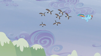 The birds following Rainbow S5E5