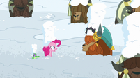 """Pinkie Pie """"is this part of the festival?"""" S7E11"""