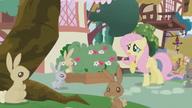 S01E04 Fluttershy próbuje uspokoić króliczki