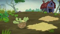 Turtle helpless on its back S5E23