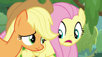 "Fluttershy ""ask yes-or-no questions"" S8E23"