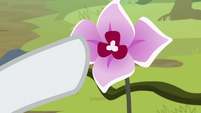 Rarity reaching out to Mistmane's flower S7E25