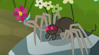 Spider presenting a flower S4E18