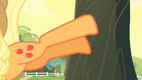 Applejack bucking the apple tree S4E07