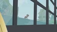 S01E09 Kucyki obserwują Zecorę przez okno