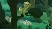 Coco Crusoe on a tree branch S5E26