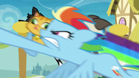 Rainbow Dash collecting multiple cats S8E5