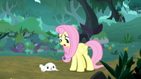 """Fluttershy """"a herd of injured chimerae!"""" S8E18"""