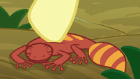 Fluttershy scratching gecko on the back S9E18