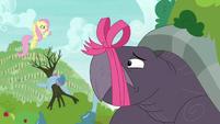 Fluttershy talking to Mr. Tortoise-Snap S9E13