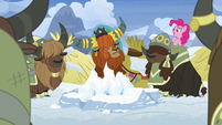 Pinkie Pie appears behind unnamed yak's back S7E11